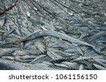 fresh fish catch in fishing net ... | Shutterstock . vector #1061156150