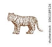 Hand Drawn Tiger. Sketch ...
