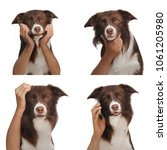 dog with human hands isolated | Shutterstock . vector #1061205980