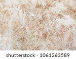 Eucalyptus Wood Pulp