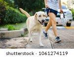 Yellow Labrador Retriever Dog...