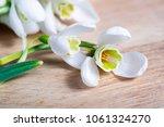 spring snowdrop flowers on... | Shutterstock . vector #1061324270