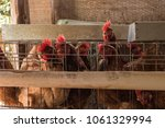 production of eggs with hens... | Shutterstock . vector #1061329994