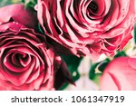 Rustic Image Of Muted Pink Red...