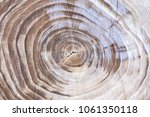 Small photo of Wood texture with tree rings (growth rings).The felled tree. Stump. Section of the trunk with annual ring.
