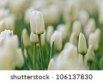 selective focus in a field of... | Shutterstock . vector #106137830