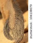 Asian Elephant Tail Closeup