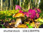 Mushroom With Red Autumn Leave...