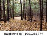 A Trail Through A Evergreen...
