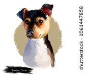 brazilian terrier dog breed...   Shutterstock . vector #1061447858