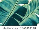 tropical banana palm leaf... | Shutterstock . vector #1061454140