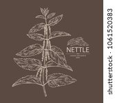 nettle  plant  leaves  branch... | Shutterstock .eps vector #1061520383