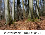 view of tree old beeches  only... | Shutterstock . vector #1061520428