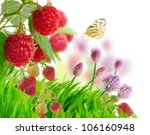 Raspberry And Strawberry In The Garden - stock photo