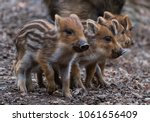4 Cute Piglets Strung Together...