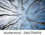 Image Of Trees Without Leaves...