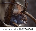 Squirrel Sitting On A Branch ...