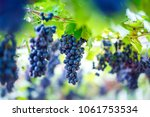 close up of bunches of ripe red ... | Shutterstock . vector #1061753534