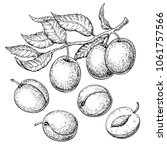 plum vector drawing set. hand... | Shutterstock .eps vector #1061757566