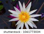 lotus flower is a flower that... | Shutterstock . vector #1061773034