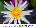 lotus flower is a flower that... | Shutterstock . vector #1061773058