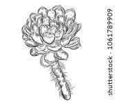 tropical plant  hand drawing ... | Shutterstock . vector #1061789909