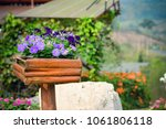 Flowers Nature Garden Closeup...