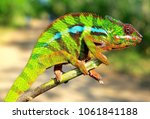 colorful driskel veiled color... | Shutterstock . vector #1061841188