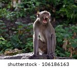 Monkeys Yawn Agape.