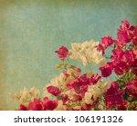 Bush Of Bougainvillea Flowers ...