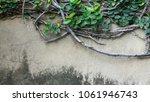 green creeper plant on concrete ...   Shutterstock . vector #1061946743