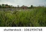 pond and huts in vietnamese... | Shutterstock . vector #1061954768