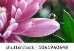 transparent beautiful water... | Shutterstock . vector #1061960648