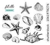 shells illustrations drawn by... | Shutterstock .eps vector #1061978276