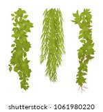 hanging plants set. liana type...   Shutterstock .eps vector #1061980220
