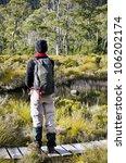tasmanian rain forest with...