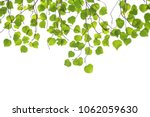green leaf frame on a white... | Shutterstock . vector #1062059630