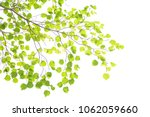 green leaf frame on a white... | Shutterstock . vector #1062059660