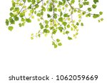 green leaf frame on a white... | Shutterstock . vector #1062059669