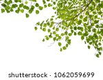green leaf frame on a white... | Shutterstock . vector #1062059699