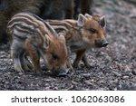 Cute Little Piglets Strung...