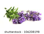 fresh lavender flowers on a... | Shutterstock . vector #106208198