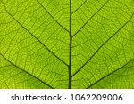 extreme close up background... | Shutterstock . vector #1062209006