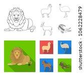 lama  ostrich emu  young... | Shutterstock .eps vector #1062228479