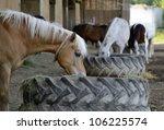 "Close to a feeding horse ""Haflinger"" in Bavaria - stock photo"