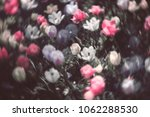 colorful tulip fields in the... | Shutterstock . vector #1062288530