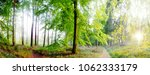 beautiful sunny surreal wood... | Shutterstock . vector #1062333179