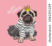 pug dog in a striped cardigan ... | Shutterstock .eps vector #1062351239