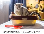 Cat Sitting In A Cat Litter Bo...