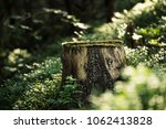 north scandinavian pine forest  ... | Shutterstock . vector #1062413828